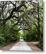 Green Swamp Tunnel Metal Print