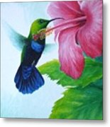 Green-throated Carib And Pink Hibiscus Metal Print