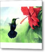 Green-throated Carib Hummingbird And Red Hibiscus Metal Print