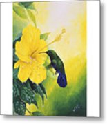 Green-throated Carib Hummingbird And Yellow Hibiscus Metal Print