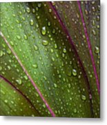 Green Ti Leaves Metal Print
