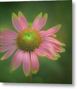 Green Tipped Coneflower Metal Print