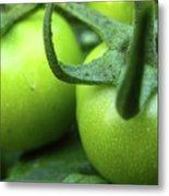 Green Tomatoes No.3 Metal Print