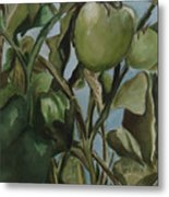 Green Tomatoes On The Vine Metal Print