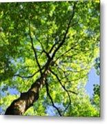 Summer Tree Canopy Metal Print