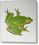 Green Tree Frog - Hyla Cinerea Metal Print