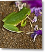 Green Tree Frog And Flowers Metal Print