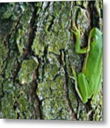 Green Tree Frog On Lichen Covered Bark Metal Print