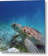 Green Turtle Metal Print