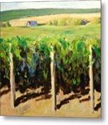 Green Vineyards Of Napa Metal Print