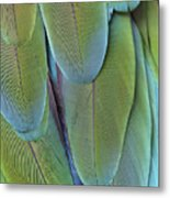 Green-winged Macaw #4 Metal Print