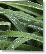 Green With Rain Drops Metal Print