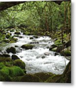 Greenbrier River Scene 2 Metal Print