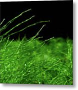 Greener On The Other Side. Metal Print