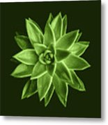 Greenery Succulent Echeveria Agavoides Flower Metal Print