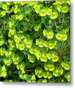 Greens And Yellows Metal Print