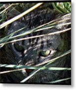Greeting Card - Joe Joe In The Grass Metal Print