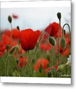 Greeting Card - Poppies In France Metal Print