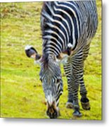 Grevys Zebra Right Metal Print