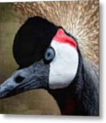 Grey - Crowned Crane Metal Print