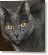 Grey Cat With Yellow Eyes Metal Print
