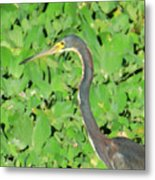 Grey Crane On Green Metal Print