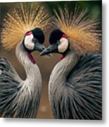 Grey Crowned Cranes Of Africa Metal Print