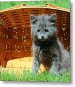 Grey Fluffy Kitten In Market Basket Metal Print