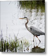 Grey Heron #3 Metal Print