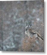 Grey In Snow Metal Print