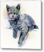 Grey Kitten Metal Print