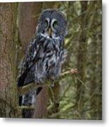 Grey Owl 3 Metal Print