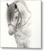 Grey Pony Metal Print
