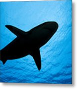 Grey Reef Shark Silhouette Metal Print