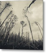 Grey Winds Bellow  Metal Print