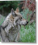 Grey Wolf Profile 2 Metal Print