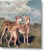 Greyhounds Metal Print