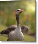 Greylag Goose Metal Print