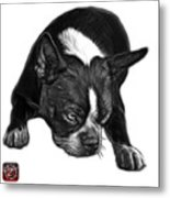 Greyscale Boston Terrier Art - 8384 - Wb Metal Print
