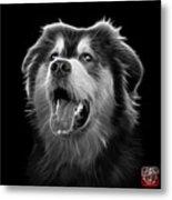 Greyscale Malamute Dog Art - 6536 - Bb Metal Print