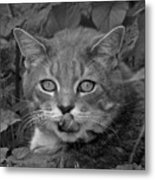 Griffin In Back And White Metal Print