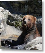 Grizzlies Snacking On Things They Find In A River Metal Print