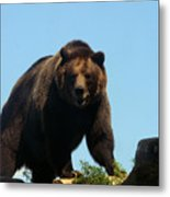 Grizzly-7746 Metal Print