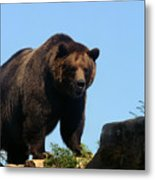 Grizzly-7747 Metal Print
