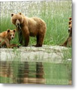 Grizzly Bear Family  Metal Print