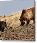 Grizzly Bear Mother And Cub Metal Print