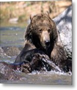 Grizzly Bear Plays In Water Metal Print