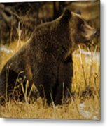 Grizzly Bear-signed-#6672 Metal Print