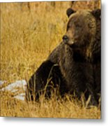 Grizzly Bear-signed-#6721 Metal Print