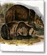 Grizzly Bear (ursus Ferox) Metal Print